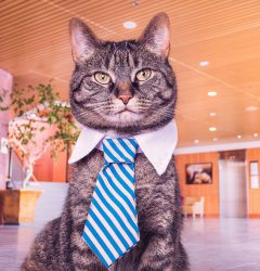 how to add covid-19 precautions on google my business - cat with tie