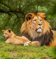 lion with cub used as a cover for a digital marketing weekly roundup article