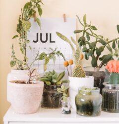 trading online voucher july 2021 dates